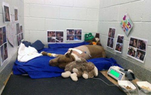Une chienne sauve sa maîtresse évanouie sur les rails 3104451725_1_5_1K8EPFJh