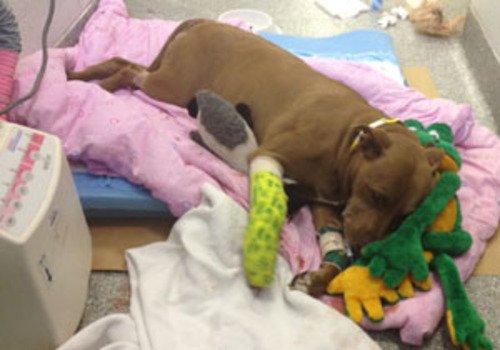 Une chienne sauve sa maîtresse évanouie sur les rails 3104451725_1_7_MTmDMA7e